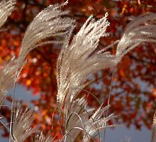 pampas flower spikes in honor of Feldore by Roslyn Lunetta