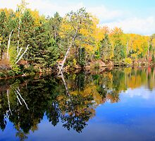 Algonquin Reflections V by Dave Law