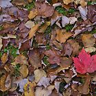 Fallen Leaves by Gerry Curry