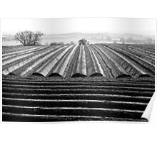 Ploughed Field 01 (Northamptonshire) Poster