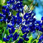 Bluebonnets by bigjason56