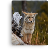 Mr.Wylie Coyote Canvas Print