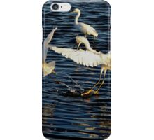 Snowy Egrets fighting in a tidal pool  iPhone Case/Skin