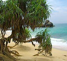 Galle, Sri Lanka by Letty
