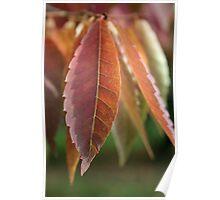 Leaf drops Poster