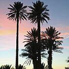 Palms at Sunset by Karen Millard