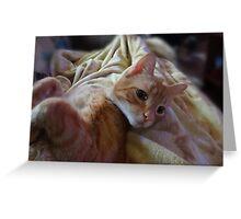 Cute Kitty Greeting Card
