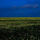 The Rape Field......... by Imi Koetz
