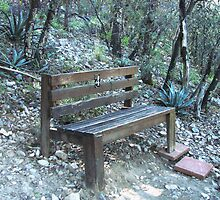 A Bench in the Forest by Kimberly Miller