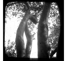 Trunks Photographic Print
