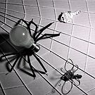 &quot;Bulb Spider &amp; Key Fly&quot; ~ IR by Pene Stevens