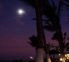 moonlight palms by Lisa Utronki