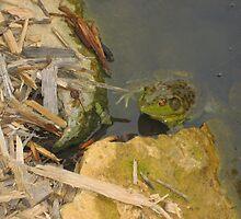 Hello Mr. Frog by mekea