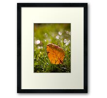 Leaf and Bokeh. Framed Print