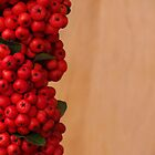Pyracantha Berries by Anna Lisa Yoder