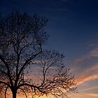 Black Walnut in Sunset by Anna Lisa Yoder