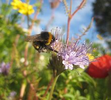 Bumble Bee on flower by knomz
