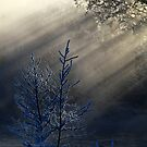 16.2.2015: Frozen Trees by Petri Volanen