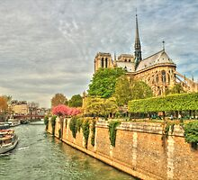 Notre Dame .. Our Beautiful Lady by Michael Matthews
