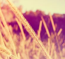 Brush Grass by Ryan Jorgensen