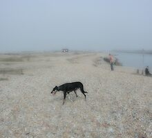 Dog on Shingle by scarlet james