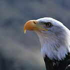 African Fish Eagle by EdgeOfReality