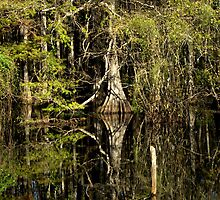 The Pond Cypress by Virginia N. Fred