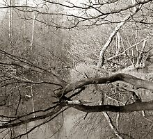 Branch in Water, Forest Pond, UK by Gary Rayner