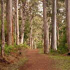 Forestry track by georgieboy98