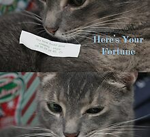 Gibson, The Fortune Teller by abfabphoto