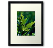 Chill of Autumn.  Framed Print