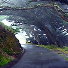 Misty Lane by imarkimages