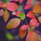 Green Leaf by Craig Forhan
