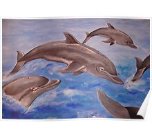Dolphin High Five Poster