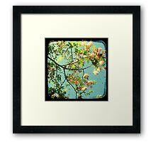Primavera - TTV Framed Print