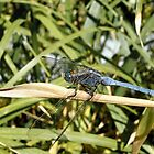 My First Dragon Fly by EdgeOfReality