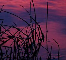 Reeds at Sunrise by Leanna Lomanski