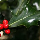 The Holly and the ... by Edward Gunn
