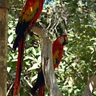 Macaws by dragonsnare