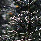 Glittering Pine by OldBirch