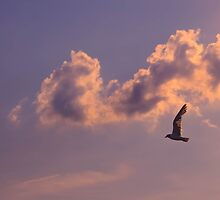 Seagull over the water by myoung07