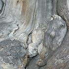 Beautiful bark by bluemobi