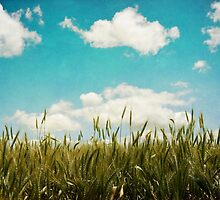 Wheat Field by LawsonImages