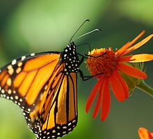 Good Nectar by Donna Adamski