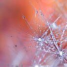 Crystals.  by Sherstin Schwartz