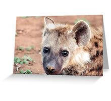 JUST STARING, THE BABY  Spotted Hyaena - Crocuta crocuta Greeting Card