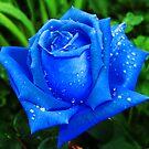 Blue Rose by Xandru
