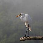 Great Egret in Early morning mist by claudefletcher
