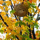 Beehive in Fall by girljo818