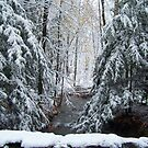 Winter Forest by ChereeCheree